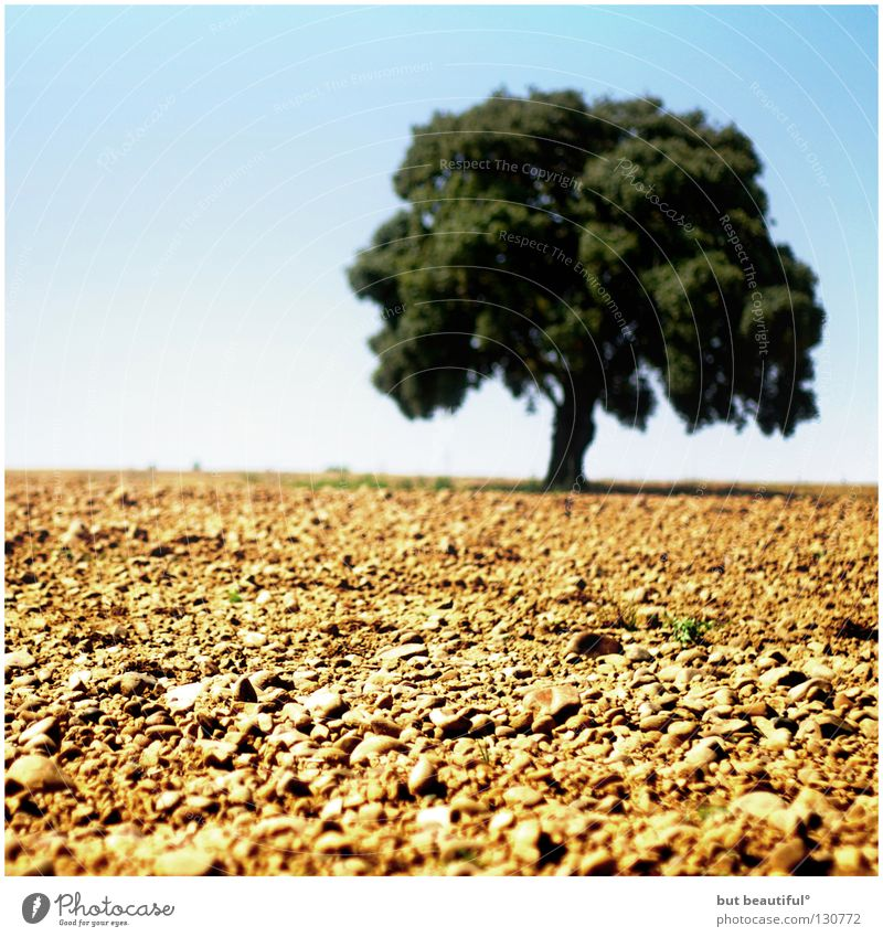 life Tree Dry Spain Hot Summer Physics Earth Sand Desert Life Landscape meseta Way of St James Camino de Santiago Warmth Thirst