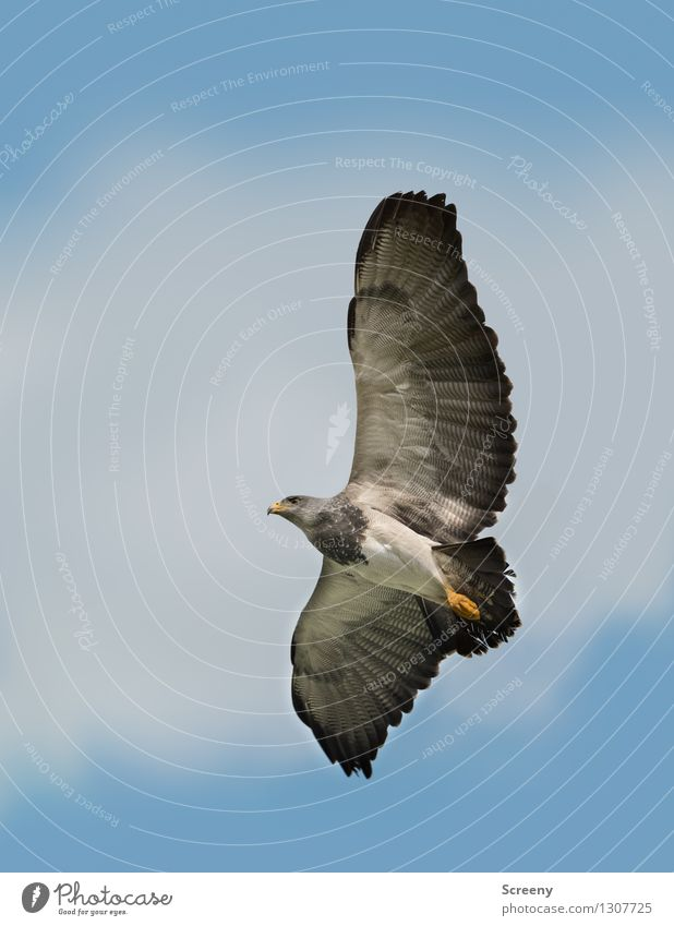 Feel Free Nature Animal Air Sky Clouds Summer Wild animal Bird 1 Flying Elegant Gray Black Watchfulness Calm Esthetic Freedom Wing Feather Colour photo