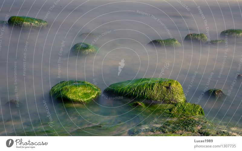 algae-covered Environment Nature Landscape Plant Sand Water Summer Climate Weather Beautiful weather Wind Fog Moss Algae Stone Hill Rock Waves Coast Lakeside