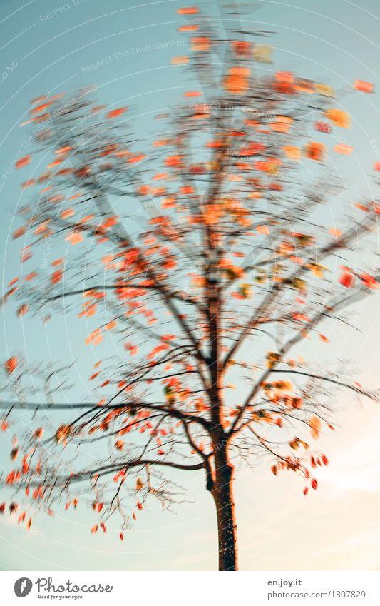 Tree shake you Nature Plant Sky Autumn Climate Climate change Weather Wind Gale Deciduous tree Autumn leaves Blue Orange Joie de vivre (Vitality) Bizarre Life