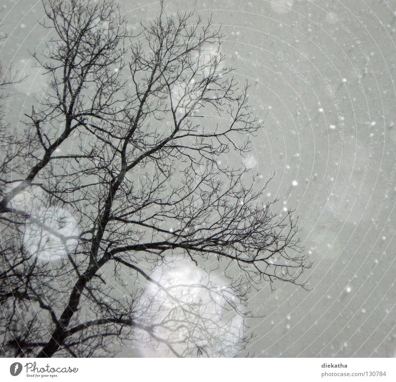 Tree Winter Calm Cold Snow Gray Snowfall Ice Weather Branch Seasons Transparent Snowflake April Flake