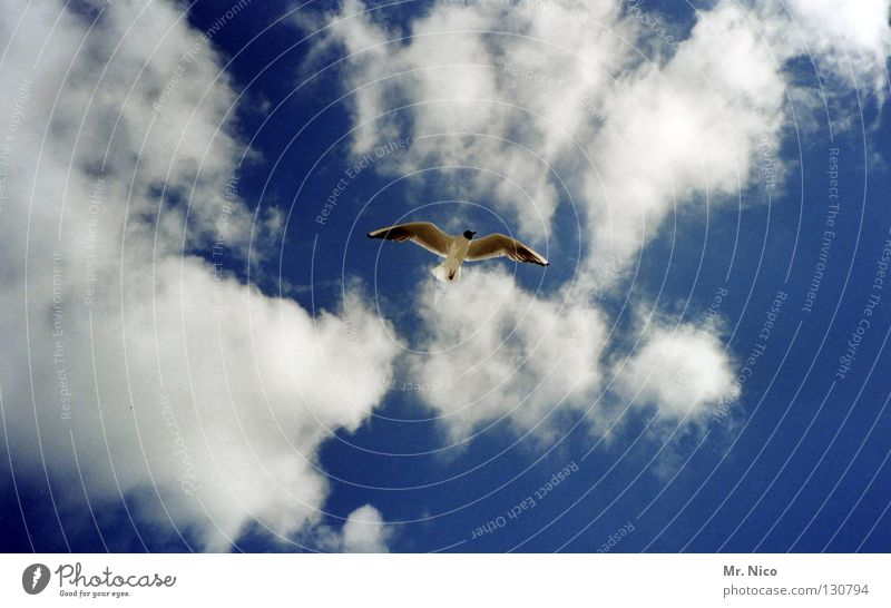 high Seagull Bird Heavenly Sky blue Clouds Bad weather Breeze Air Aviation Handbill Span Disperse Loneliness Beak Flying Infinity Tall Above soar mew sea mew