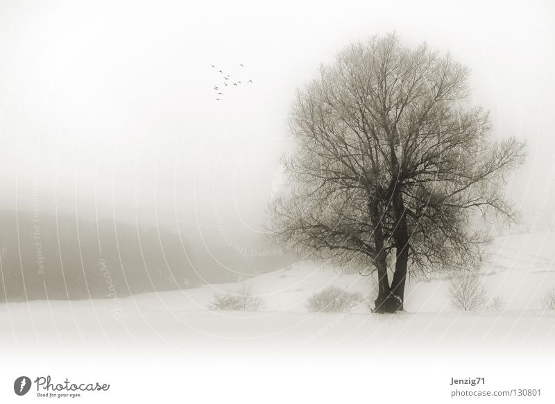 melancholic - fog winter. Tree Fog Winter Snowscape Monochrome Territory Field Comfortless Nature Weather Landscape clapped Cold Frost Sadness Exterior shot