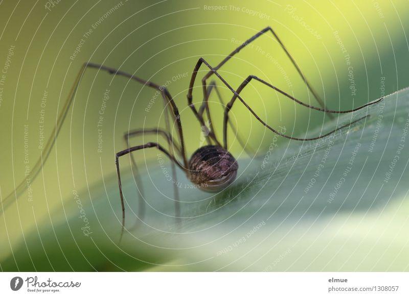 Nature Green Leaf Brown Fear Elegant Esthetic Threat Cool (slang) Curiosity Network Near Brave Creepy Long Irritation