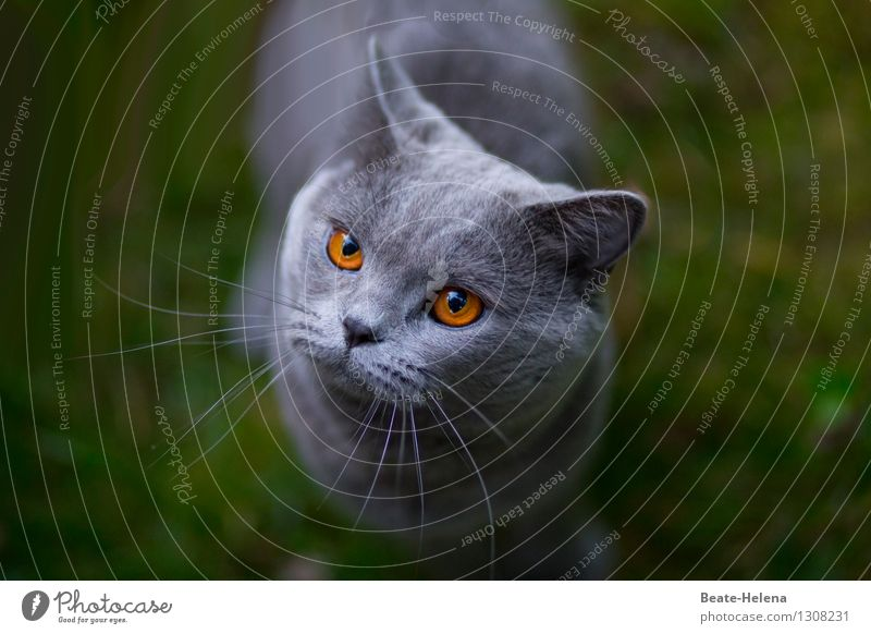 Cat Green Beautiful Calm Warmth Love Grass Gray Think Friendship Glittering Illuminate Communicate Observe Warm-heartedness Round