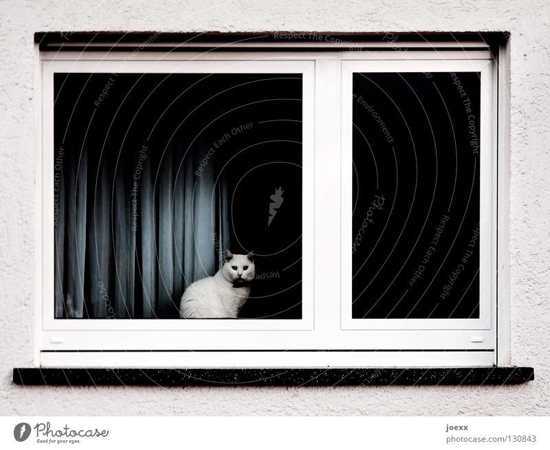 Room with a view Vantage point Handrail Dark Captured Window Window board Window frame Cozy Domestic cat Pet Cat Boredom Meow Looking Calm Animal Eerie Drape