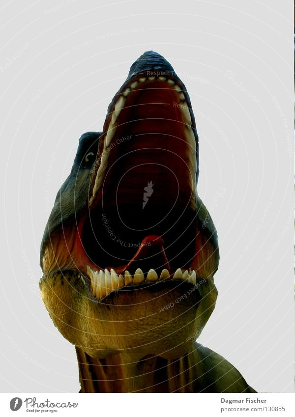 Fiffi, my pet. Colour photo Isolated Image Nature Animal 1 Threat Fear Dangerous Aggression Aggravation Dinosaur Monster Saurians Animal figure Threaten Extinct