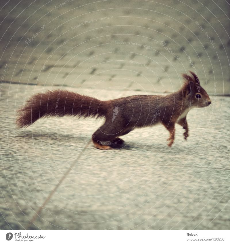 Red Animal Jump Brown Fear Small Speed Sweet Dangerous Pelt Cute Dynamics Escape Mammal Panic Tails