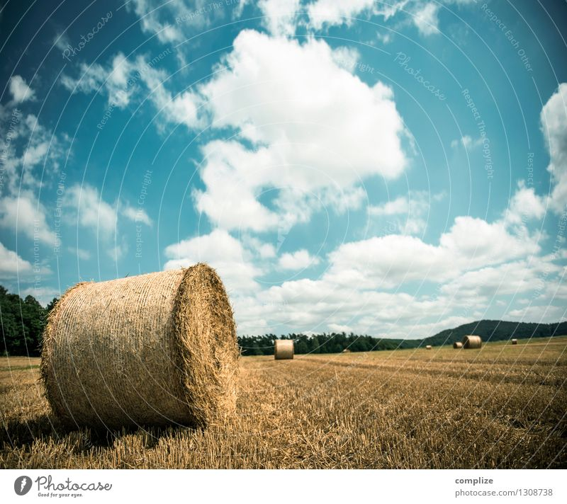 Needle in a haystack Wellness Environment Nature Earth Sky Sun Climate Climate change Weather Beautiful weather Plant Meadow Field Idyll Bale of straw Straw