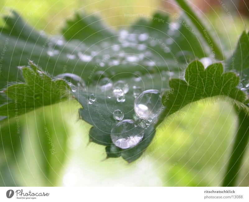 morning dew Leaf Rope Water Drops of water