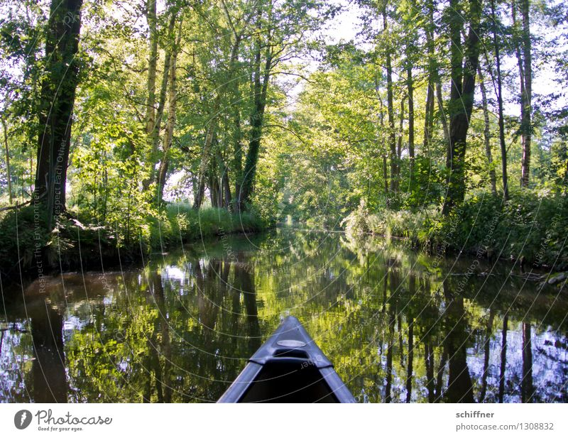 Nature Plant Green Water Tree Landscape Environment Beautiful weather River River bank Lace Brook Canoe Foliage plant Spree Kayak