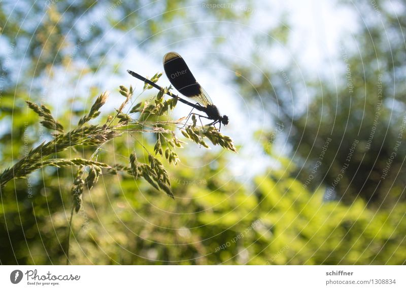 Plant Green Tree Animal Forest Black Grass Bushes Sit Beautiful weather Animal face Dragonfly Dragonfly wings Dragonfly wing