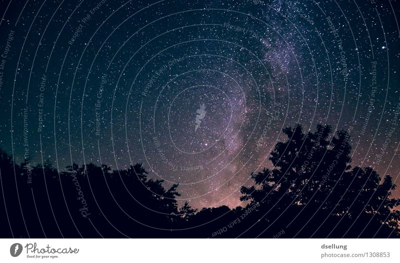 at night in the forest 2. Beautiful Calm Far-off places Summer Nature Sky Night sky Stars Horizon Forest Discover Glittering Illuminate Dream Exceptional Dark