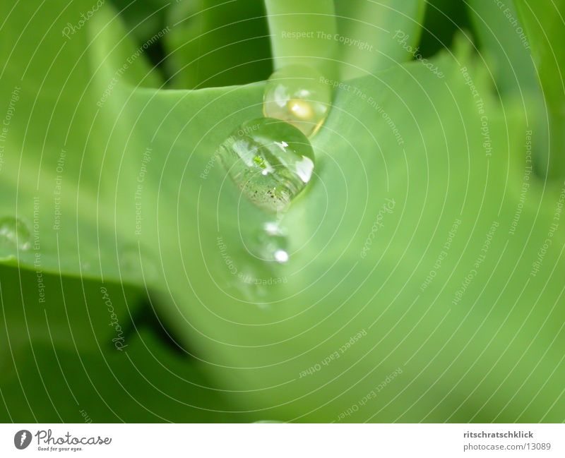 morning dew the second Leaf Rope Water Drops of water