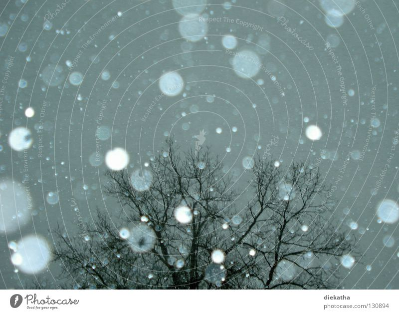 Tree Winter Calm Cold Snow Gray Snowfall Ice Weather Branch Seasons Transparent Snowflake April Flake