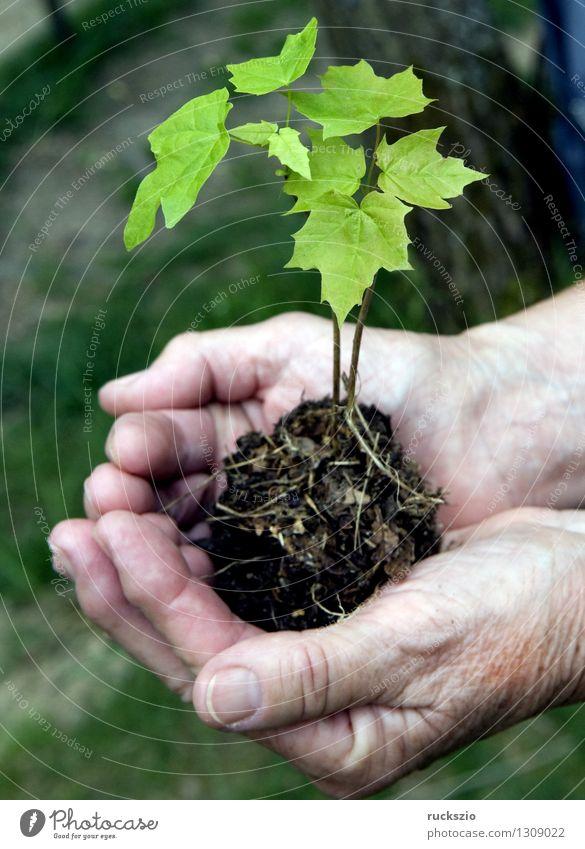 Plant Tree Hand Leaf Planning Discover Plantlet Impression
