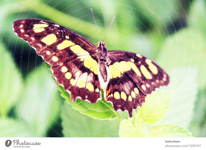 In full splendour Nature Plant Animal Spring Summer Beautiful weather Tree Bushes Leaf Garden Park Meadow Wild animal Butterfly Wing 1 Observe Relaxation Flying