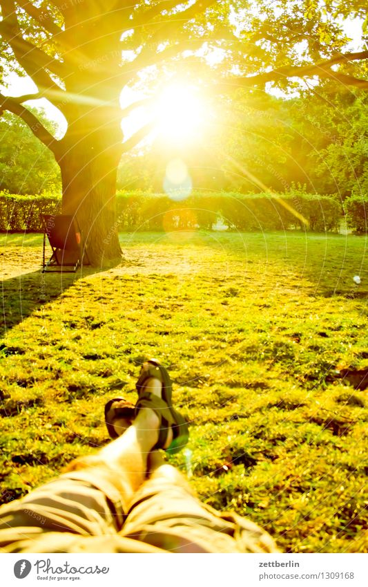 midsummer Summer Park virgin heathland Tree Sun Back-light Bright Dazzle Lie Couch Legs Feet Footwear Relaxation Comfortable Summer evening Meadow