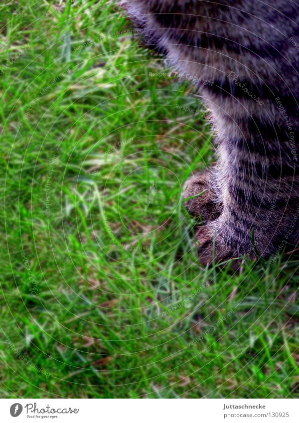 Cat Nature Green Animal Meadow Grass Gray Garden Sit Lawn Pelt Concentrate Hunting Pet Paw Mammal