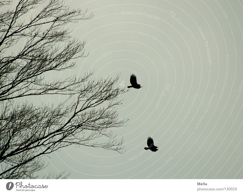 duet Environment Nature Animal Air Sky Tree Bird 2 Pair of animals Flying Free Together Natural Gloomy Gray Freedom Equal Dreary In pairs Colour photo Deserted