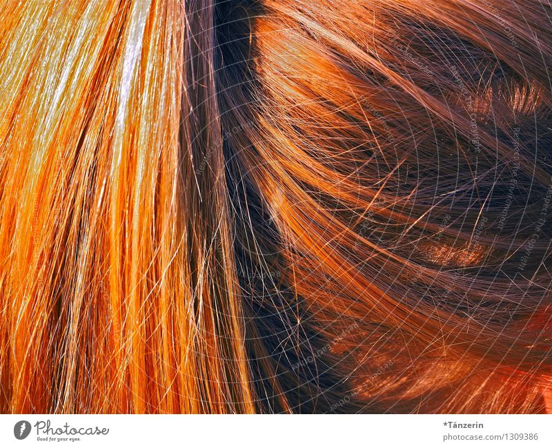 pigtail Beautiful Hair and hairstyles Summer Human being Feminine Young woman Youth (Young adults) 1 18 - 30 years Adults Blonde Red-haired Long-haired Braids