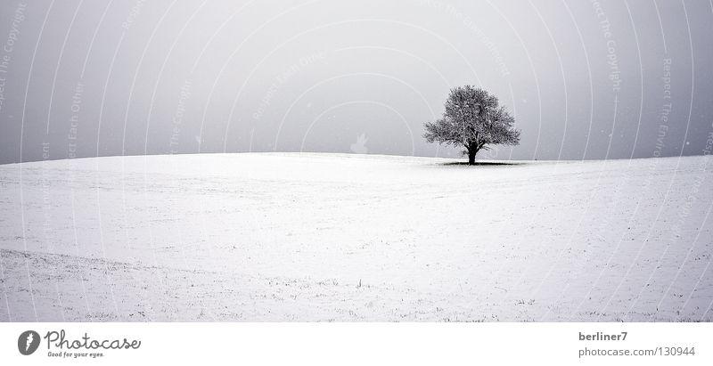 Wavy horizon Horizon Undulating Tree Individual Winter Snow Sky single tree Contrast