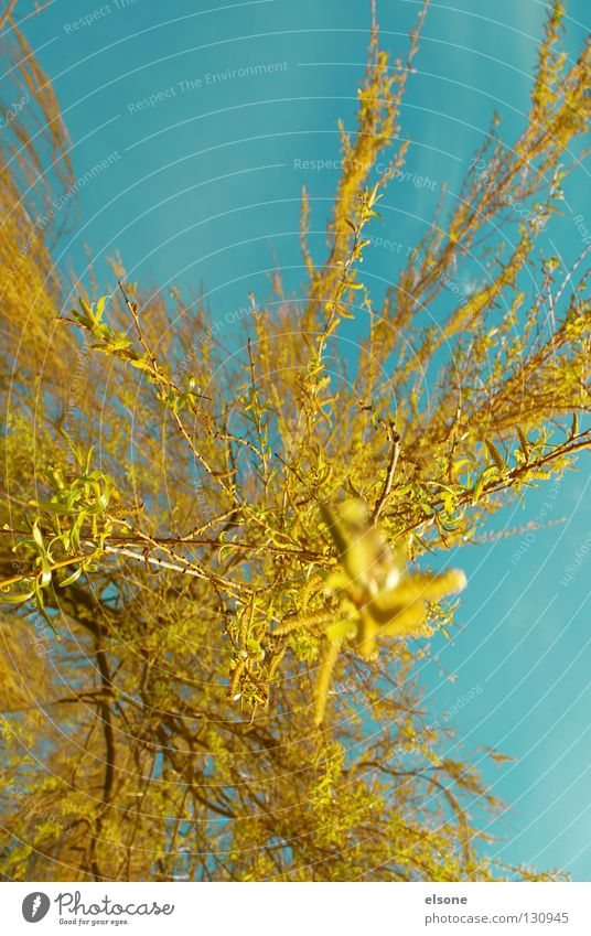 ::EXPLOSION:: Yellow Red Swing Weeping willow Tree Spring Blossom Colour Orange Blue Flying Pasture Bud elson