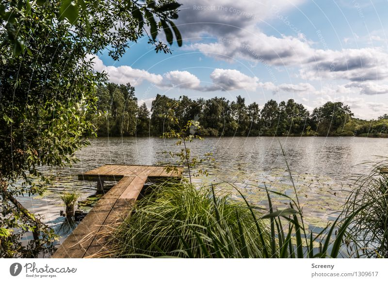 Footbridge at the lake #2 Nature Landscape Plant Water Sky Clouds Summer Beautiful weather Tree Grass Bushes Lakeside Relaxation Serene Calm Idyll Colour photo