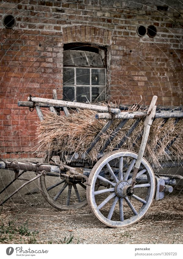 Come home from the field. Elements Earth Autumn Field Village House (Residential Structure) Window Horse-drawn carriage Sign Work and employment