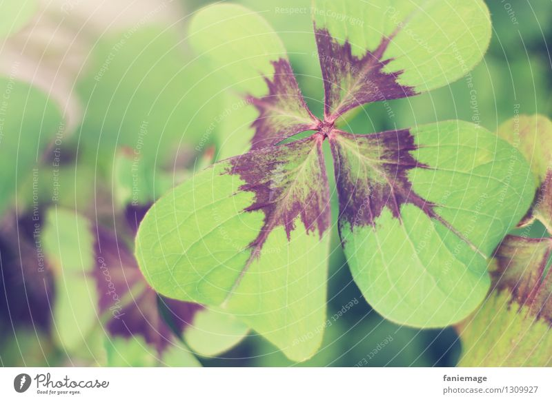 Good luck. Nature Garden Happy Four-leafed clover Good luck charm Clover Cloverleaf Green Congratulations Card Four-leaved Leaf Bright green Desire