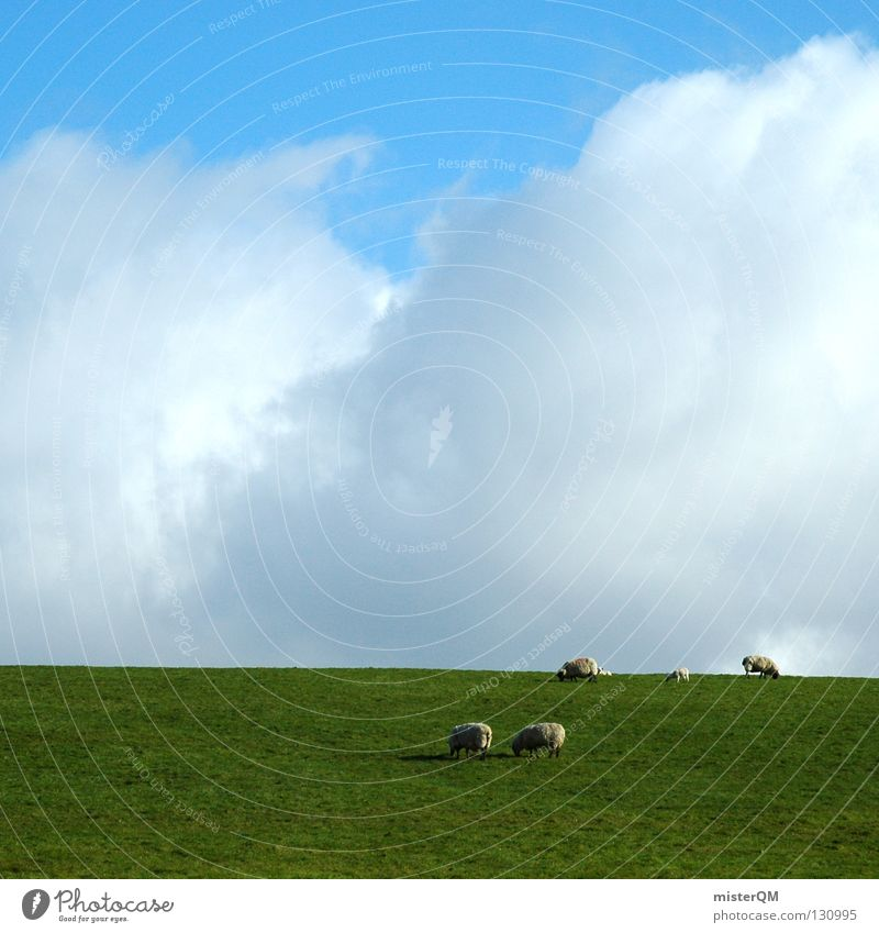 You'd have to be a sheep. Sheep Grass Meadow Clouds Silhouette Sky Calm Peace Peace-loving Hazard-free To feed Romance Green White Gray Future Vantage point
