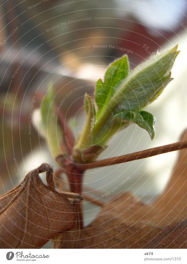 Spring will come Leaf Green Plantlet