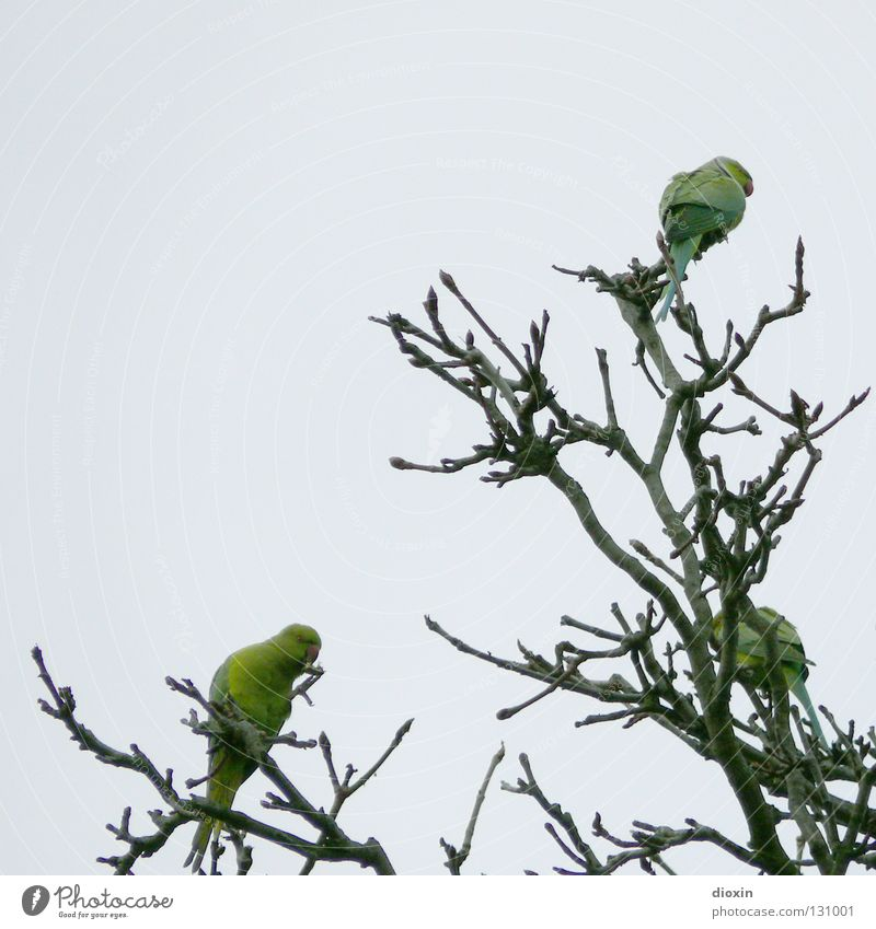 Tree Green Freedom Bird Flying Feather Wing Branch Beak Mannheim Rhineland-Palatinate Parrots Heidelberg Drift Ludwigshafen