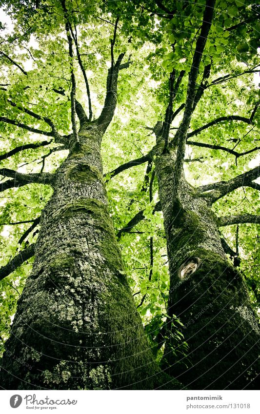 trees Jump high old twins leaves under