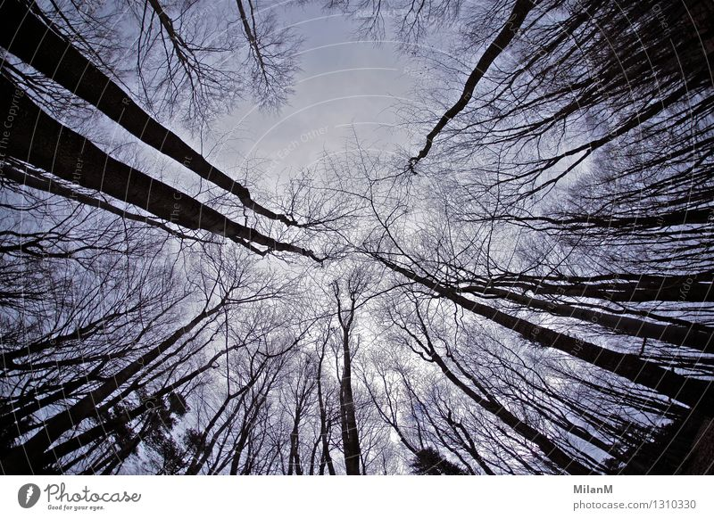wood Environment Nature Sky Winter Tree Forest Wood Threat Dark Gigantic Creepy Wild Emotions Moody Fear Distress Adventure Chaos Experience Grief Sadness