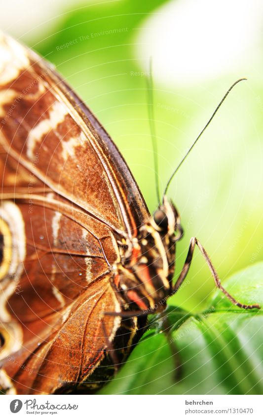 lifelines Nature Plant Animal Spring Summer Tree Leaf Garden Park Meadow Wild animal Butterfly Wing blue Morphof age 1 Observe Relaxation Flying To feed Sit