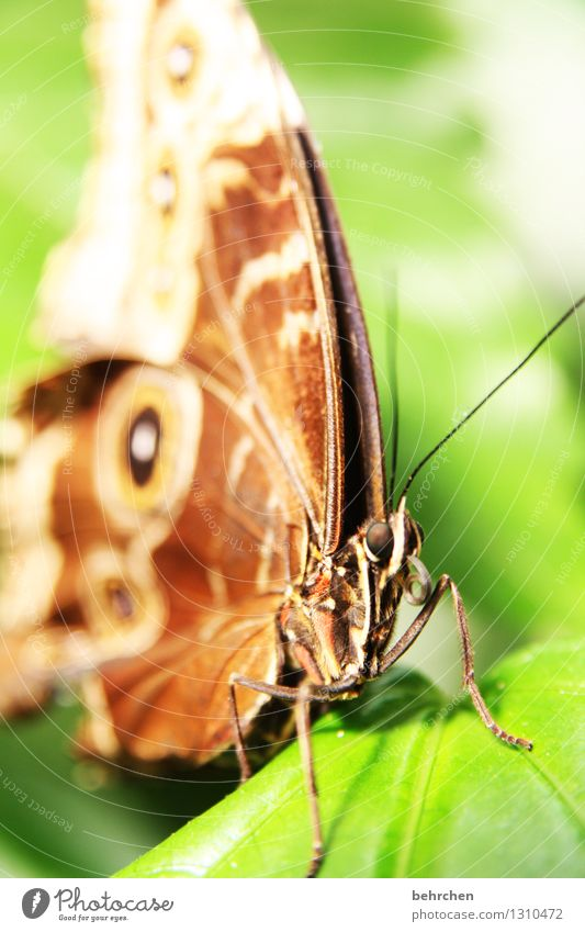 coiled Nature Plant Animal Spring Summer Beautiful weather Tree Leaf Garden Park Meadow Wild animal Butterfly Animal face Wing blue Morphof age 1 Observe