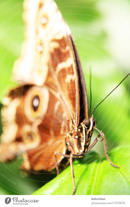 Nature Plant Green Beautiful Summer Relaxation Leaf Animal Spring Eyes Meadow Garden Exceptional Flying Legs Brown