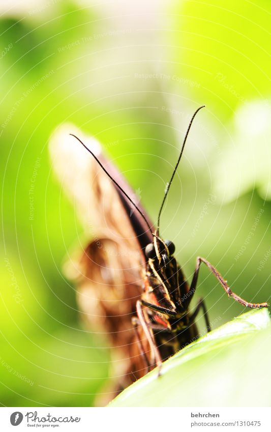 mike glotzkowski to the second Nature Animal Spring Summer Beautiful weather Garden Park Meadow Wild animal Butterfly Animal face Wing 1 Observe Relaxation
