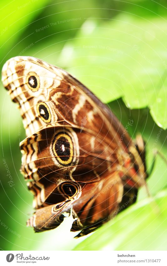 You want to rethink your focus?! Nature Plant Animal Spring Summer Beautiful weather Tree Leaf Garden Park Meadow Wild animal Butterfly Wing blue Morphof age 1