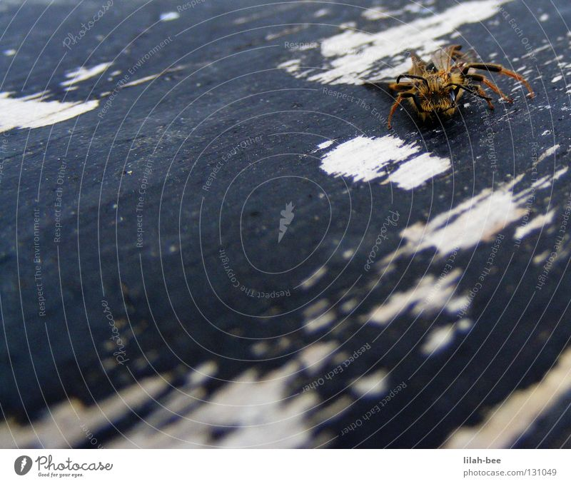 Blue White Black Relaxation Yellow Wood Sleep Crawl Spine Wasps Cartoon film Hornet Maya the Bee