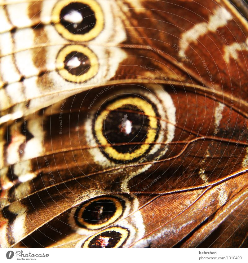 Close to the skin Animal Garden Park Meadow Wild animal Butterfly Wing blue Morphof age 1 Touch Flying Exceptional Exotic Beautiful Natural Brown Pattern Eyes