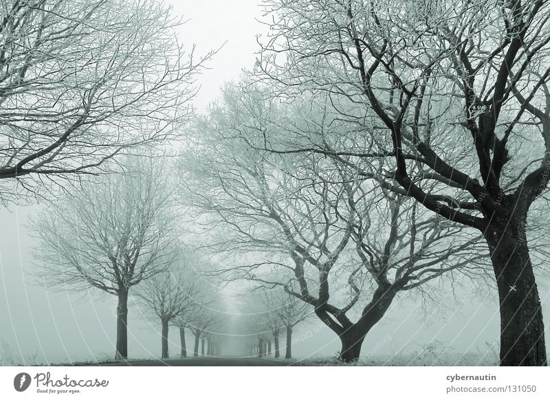 nebulous variant Avenue Tree Winter Hoar frost Cold Fog Branch Street Frost Ice Snow