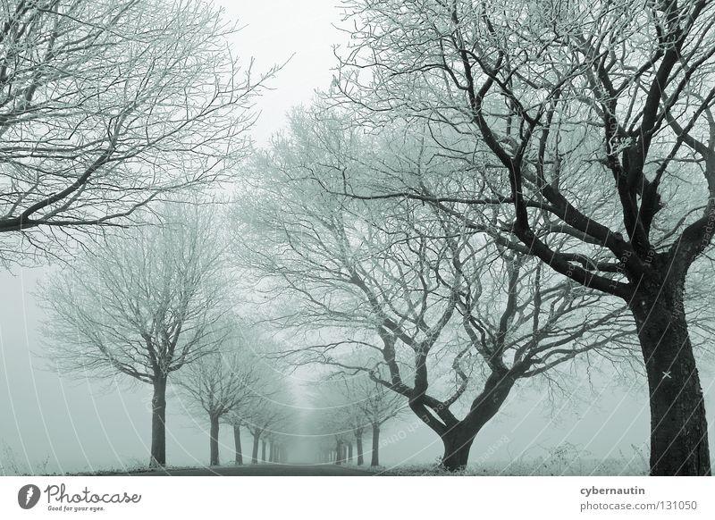 Tree Winter Street Cold Snow Ice Fog Frost Branch Avenue Hoar frost