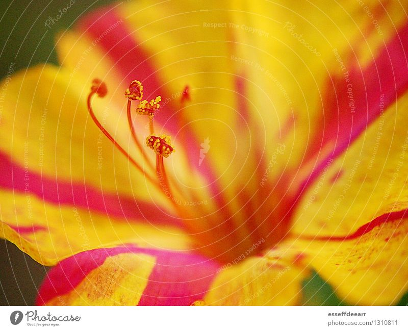 Macro Garden Action: Yellow One Environment Nature Plant Sun Summer Climate Beautiful weather Flower Blossom Foliage plant Blossoming Fragrance Relaxation Kneel
