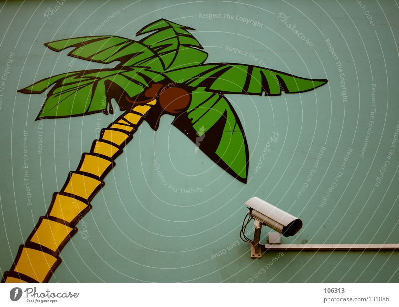 Green Yellow Wall (building) Search Safety Protection Observe Palm tree Video camera Real estate Electronic Painted Surveillance Private Technical