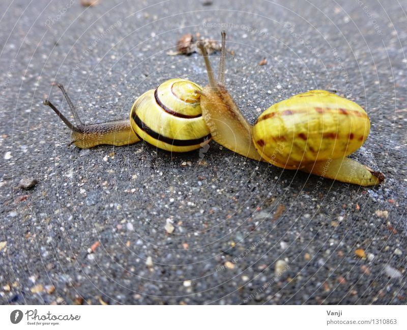 snail love Animal Snail 2 Pair of animals Stone Together Love of animals Calm Slowly Snail shell Colour photo Exterior shot Close-up Animal portrait