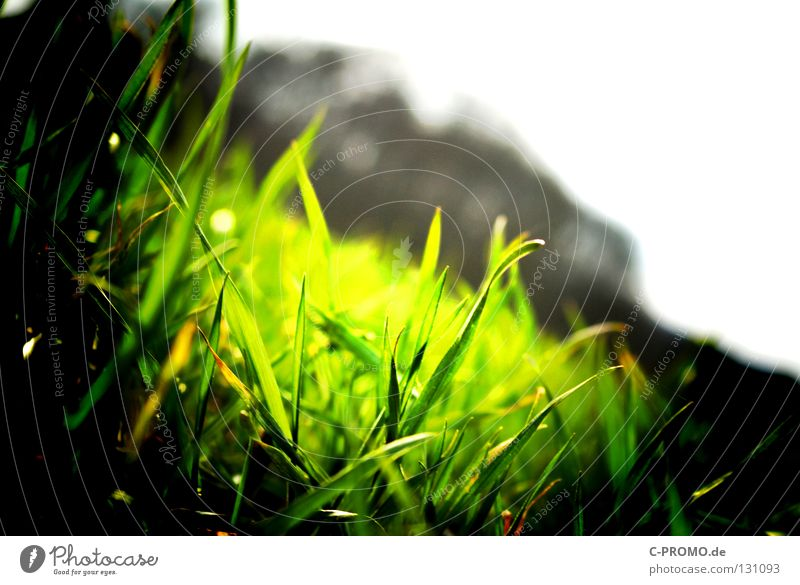 Nature Green Meadow Grass Lawn