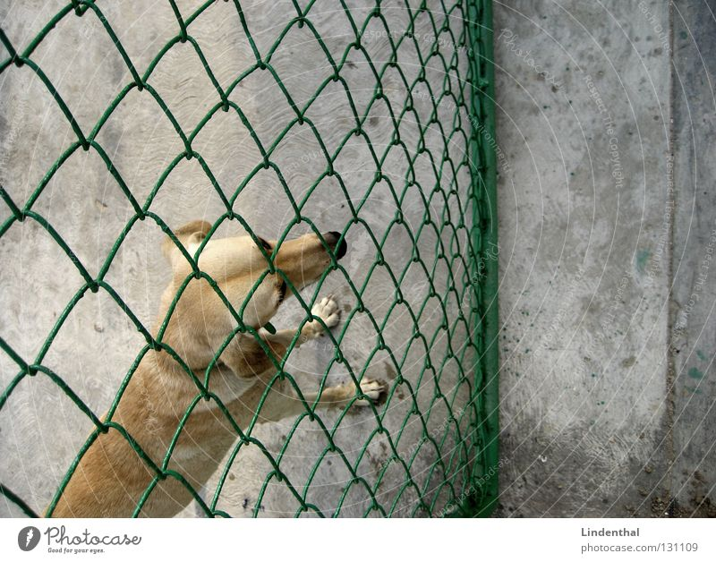 Above Dog Sadness Concrete Grief Longing Pelt Entrance Fence Mammal Grating Miss Wire netting Concrete floor