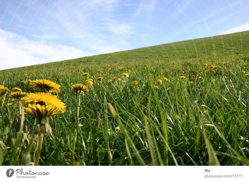 Sky Sun Green Meadow Grass Spring Idyll Dandelion Pasture Mecklenburg-Western Pomerania